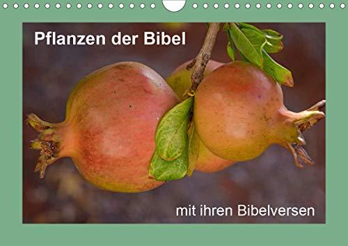 Pflanzen der Bibel (Wandkalender 2021 DIN A4 quer)