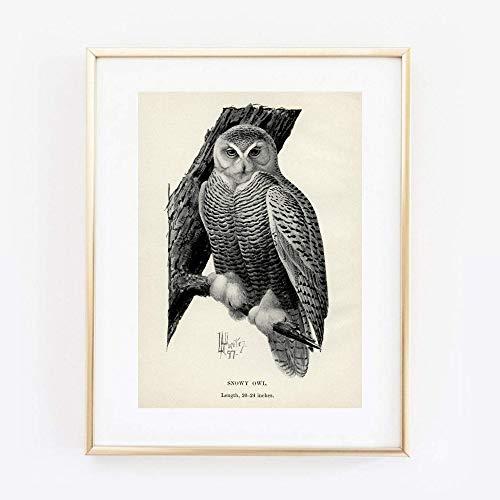 Din A4 Kunstdruck ungerahmt Eulen Eule Schneeeule Tafel Vintage Druck Poster Bild Geschenk