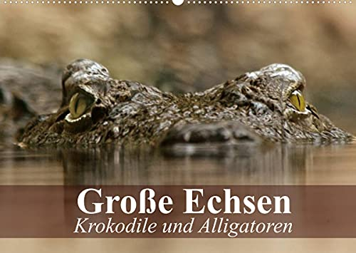 Große Echsen. Krokodile und Alligatoren (Wandkalender 2022 DIN A2 quer)