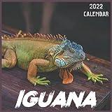 Iguana Calendar 2022: 2021-2022 Iguana Weekly & Monthly Planner | 2-Year Pocket Calendar | 19 Months | Organizer | Agenda | Appointment | For Iguana Lovers