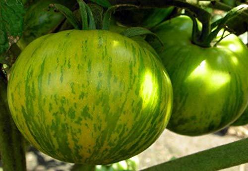 Portal Cool Zebra Zelenaya de tomates de graines - le zèbre vert organiquement développé l'héritage non-OGM
