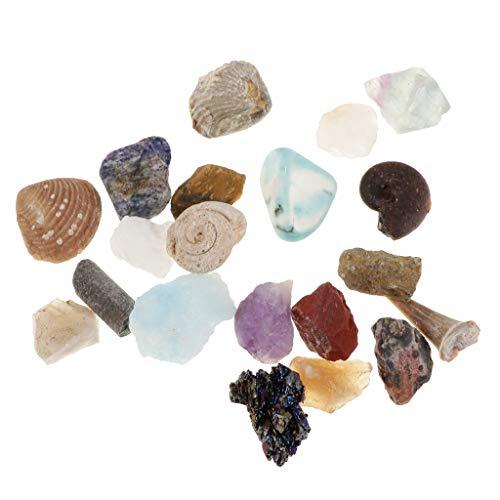 B Blesiya 20 Piezas Espécimen de Minerales y Rocas de Colección con Caja de Almacenaje, Regalo de Recuerdo para Adultos Niños