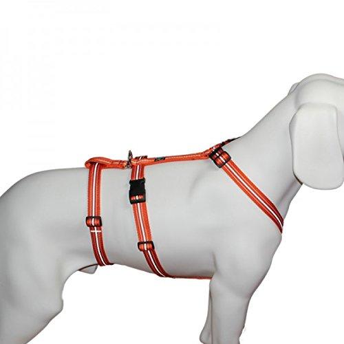 Das Original - NoExit Hundegeschirr ® - 100 % ausbruchsicher für Angsthunde, Sicherheitsgeschirr für Pflegehunde, Panikgeschirr, Reflexband orange, Bauchumfang 50-65 cm, 20 mm Bandbreite