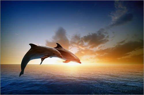 Posterlounge Hartschaumbild 60 x 40 cm: Delfine im Sonnenuntergang von Editors Choice