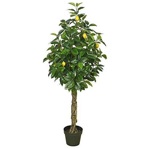 Vickerman TA171101 Flowering Lemon Tree