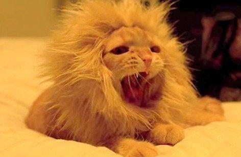 ペット用 ウィッグ ライオン たてがみ風 カツラ かわいい おもしろ ジョーク グッズ 着せ替え (M)