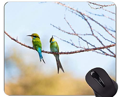 Mausunterlage Fertigen Sie kundenspezifisch an, Kolibri-Spiel-Mausunterlagen des Wasservogel-Tierafrika