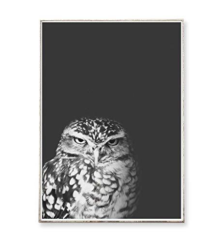 Kunstdruck Poster Bild GRUMPY OWL -ungerahmt- Vogel, Eule, skandinavisch, nordisch