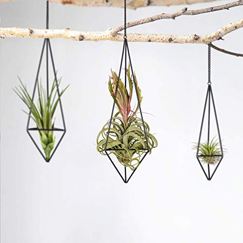 Metallic planter for air plants