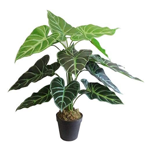 Leaf Hoja 60 cm (2 pies) Alocasia ICA Polly Taro Planta Artificial...