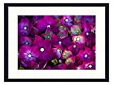 OiArt Wall Art Canvas Prints Wood Framed Paintings Artworks Pictures(20x14 inch) - Flower Flowers Rosa Violet Flowers Dew