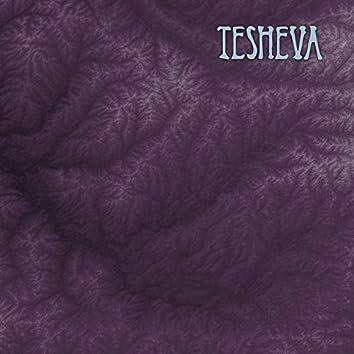 The Tesheva