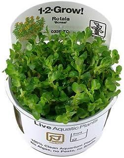 【Tropica・水草】 ロタラsp.ボンサイ 1・2・Grow! (無農薬)(スネール無し) (1カップ)