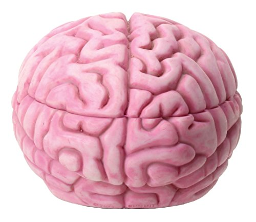 Brain Storage Box