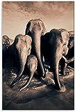 DCPPCPD Cuadro En Lienzo 40 * 60cm Sin Marco Elefante de Gregory Colbert y Cuadro Moderno para decoración Familiar Moderna Póster de Pintura