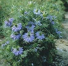 Nigella Miss Jekyll Sky Blue 5,000 Seeds