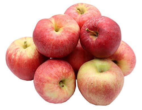 Bleichhof Äpfel Royal Gala - feste, süße Sorte aus der Pfalz (5kg) Neue Ernte 2020
