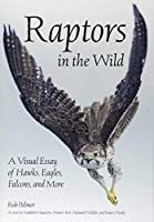 Raptors in the Wild: A Visual Essay of Hawks, Eagles, Falcons and More