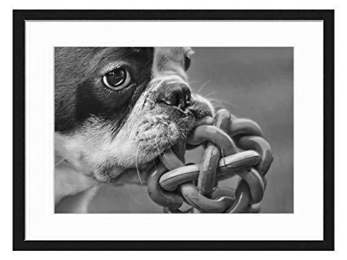 Wood Framed Canvas Artwork Home Decore Wall Art (Black White 20x14 inch) - Dog French Bulldog Play Grass Animal 1
