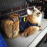 Mynwood Cat Jacket Harnais en tissu fantaisie pour chatons ou chats adultes (Batman, chaton).