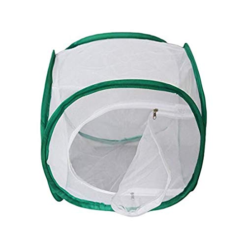BicBugs White Butterfly Insect cage Vinyl 12 New mart life Viewing Window with