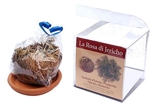 Rosa di Jericho confezionata con istruzioni di mantenimento e cenni storici