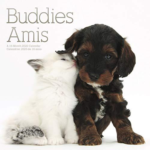 Peluche Pets Vita da Animali Buddy Ty T42195