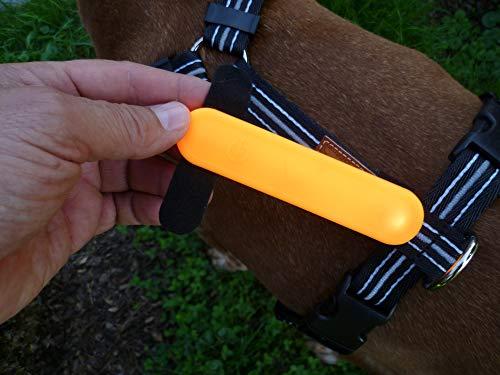 KERBL - MaxiSafe Leuchtband mit LED, orange zum Befestigen am Hundegeschirr, Halsband, Leine, Bekleidung für die Aktive Beleuchtung