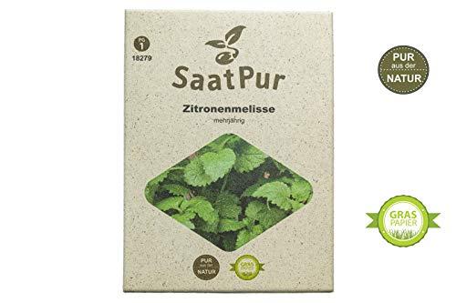 SaatPur Zitronenmelisse Samen, Saatgut für ca. 250 Pflanzen