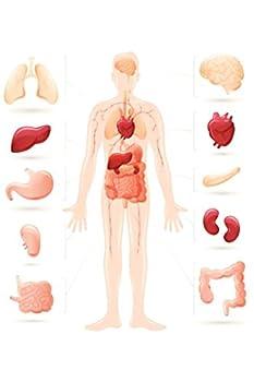 diagram human body