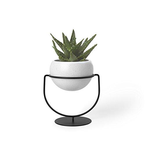 Umbra 1009251-748 Nesta, Table Top or Hanging Modern Planter, Ideal Succulent Plant Holder, White/Black,Single Planter