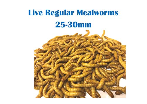 The Mealworm Company LIVEFOODS DIRECT 500g Live Regular Mealworms 25-30mm