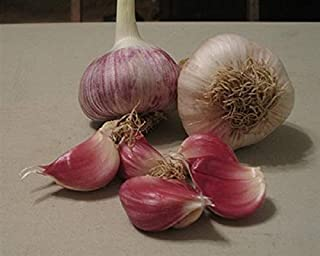 Best german red garlic description Reviews