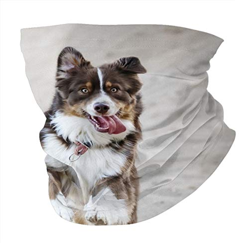 Verschiedene Kopftuch, personalisierbar, Outdoor-Stirnband, Sport-Kopfbedeckung, Laufen, weiß, braun, und schwarzer Hund