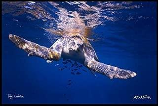 Best turtle bay flooring Reviews