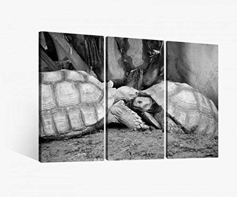 el mas reciente Foto en Lienzo 3 Piezas Tortuga Amor Animales Par Par Par Beso Negro blancoo Cuadro Fotos de Lona Cuadros en Lienzo Madera Mural de Varias Partes 9W689-120x80cm (3Stk 40x 80cm)  online al mejor precio