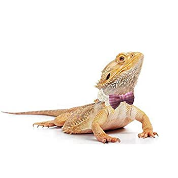 Lizard Bearded Dragons Stretchy Pink White Plaid Bowtie with Elastic Lace Decor Handmade Bowknot Collar Bandanas Costume Reptile Apparel Photo Gift Lizard Clothes Accessories for Bearded Dragon