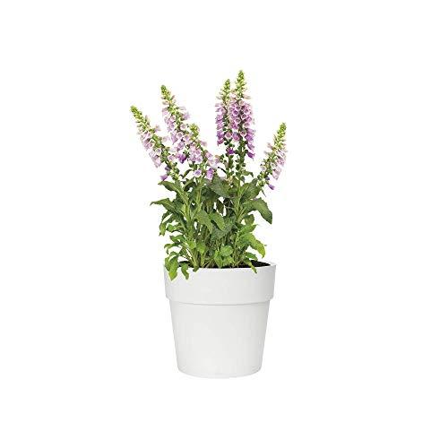 Elho Vibia Straight rond 30 - bloempot - wit - buiten - Ø 30 x H 27,7 cm