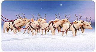 Avanti 6-Count Humorous Christmas Cards with Envelopes, When Reindeer Pigs Fly