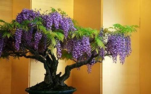 Paint by Numbers DIY Oil Painting Kits for Adults-Bonsai Flower Tree Wisteria