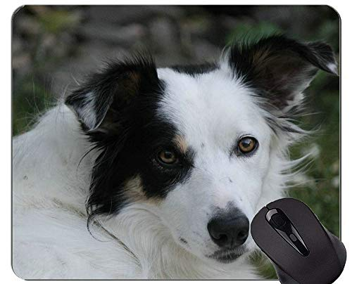 Schäferhund-Welpen-Mausunterlage, Border-Collie-personalisierte Rechteck-Spiel-Mausunterlagen