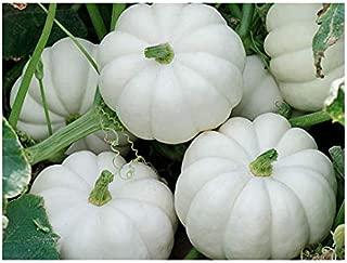 20 Small White Pumpkin Casperita Seeds - Non GMO - Marde Ross & Company