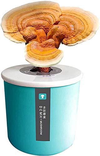 Rowe Mágico Mushroom Cultivo Kit de Interior Mycelium Semillas de Hongos Kit de Inicio DIY Oyster Mushroom Spawn Compost Cosecha Harvest Fungi Mushrooms en 25 días (Color : Green, Size : Lingzhi)
