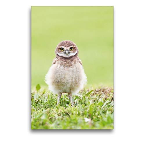 Premium - Lienzo textil (50 cm x 75 cm de alto, figura de vuelo de búho en una pradera verde), imagen sobre bastidor, diseño de cunicularia, Florida, Estados Unidos (CALVENDO Tiere);CALVENDO Animales