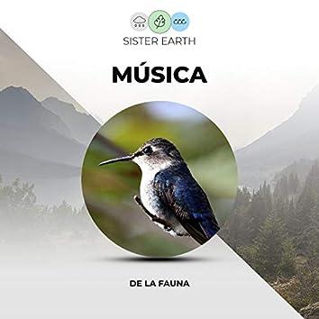 Musica Relajante de Vida Silvestre