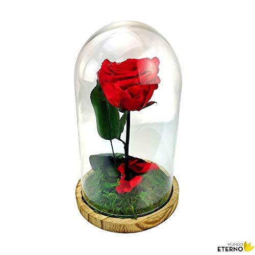 Cúpula Bella y Bestia Rosa Eterna Preservada roja
