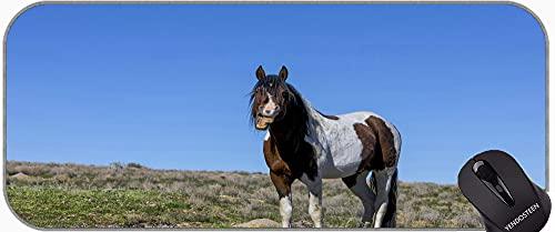 XXL Gaming Mauspad, Pferd Wild Horse Animal Horse Office Mauspad