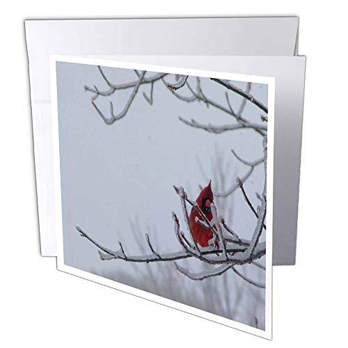 3dRose gc_16301_1 wenskaart, motief: mannelijke rode vogel op ijzige takken, 15,2 x 15,2 cm, 6 stuks