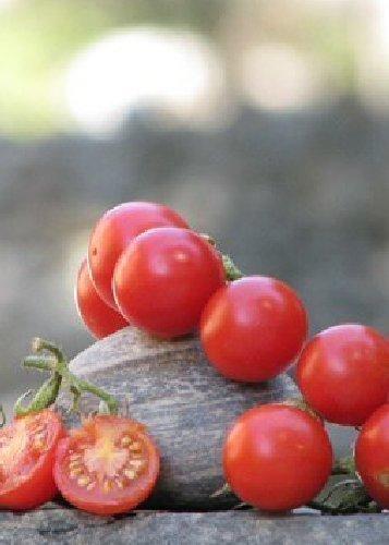 Tropica - Tomaten - Mexikanische Honigtomate (Lycopersicon esculentum) - 10 Samen - Mexikanische Cherry - Tomate