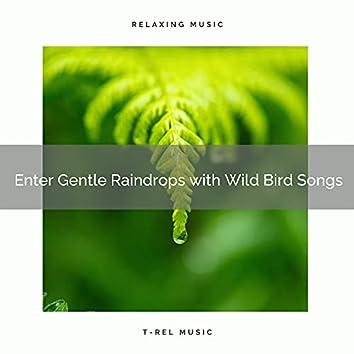 ! ! ! ! ! ! ! ! ! ! Enter Gentle Raindrops with Wild Bird Songs